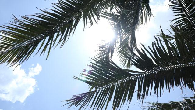 ベトナムミーケビーチの海岸